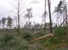 Sturm Kyrill